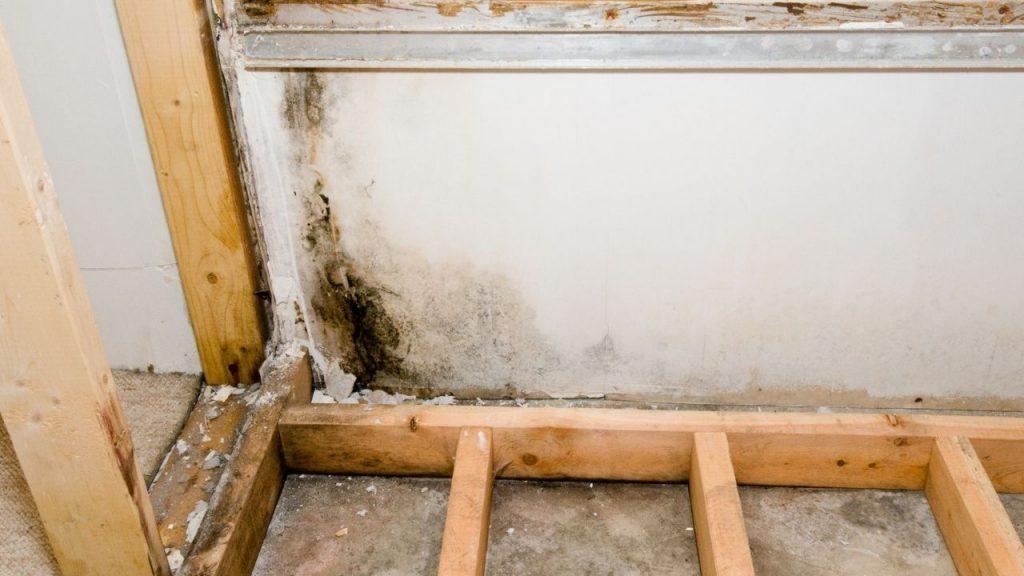 Basement Mold Removal Denver CO_