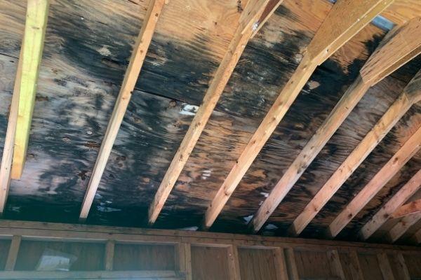 Black Mold Removal Cost Denver CO