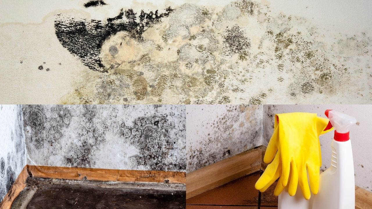 Black Mold Removal Denver CO