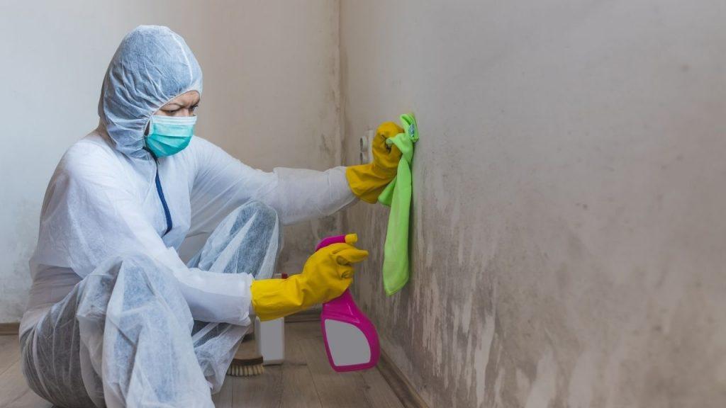 Mold Remediation Cost Denver CO
