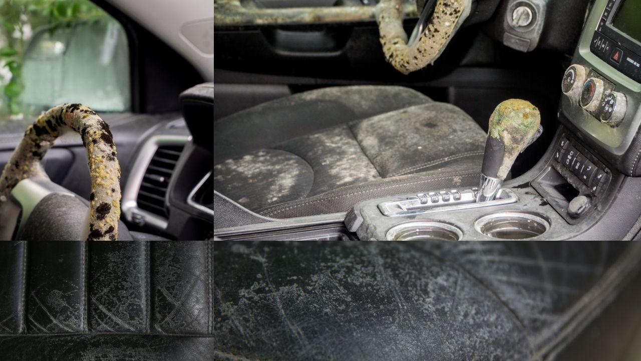 car mold pictures denver